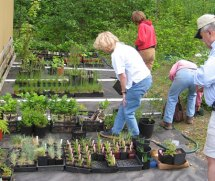 Our Native Plant Nursery