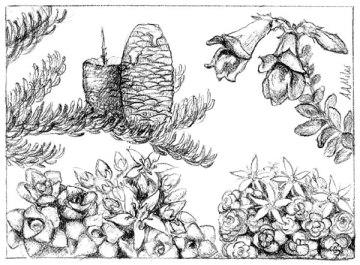 Sub-Alpine Garden Artwork by AA Miles